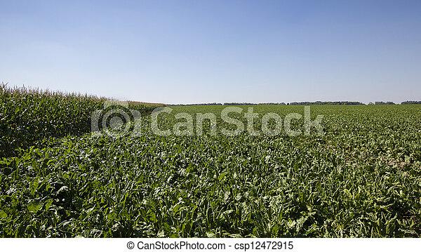 agriculture - csp12472915