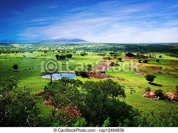 savanne, Blüte, tansania, afrikas,  panorama - csp12484836