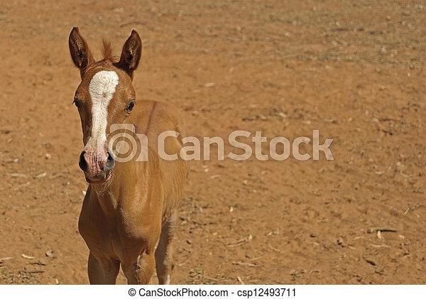 mammal - csp12493711