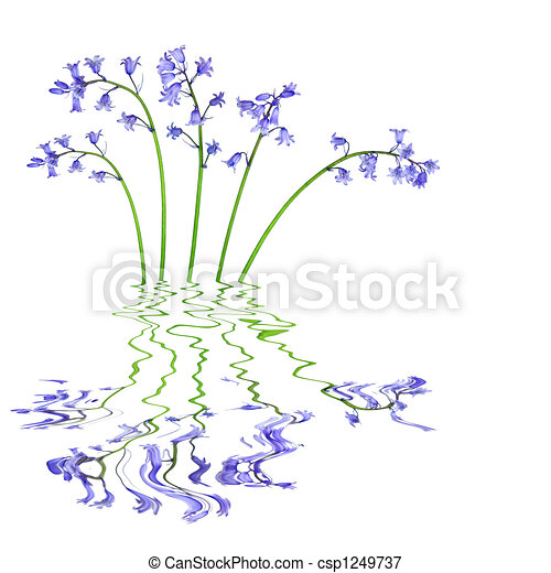 Bluebell Flowers - csp1249737