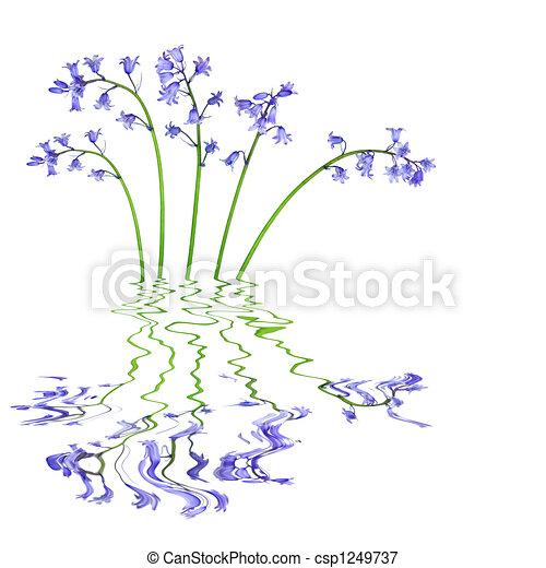 Bluebell Flowers - csp1249737