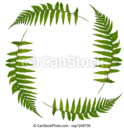 Fern Leaf Symbol  - csp1249738