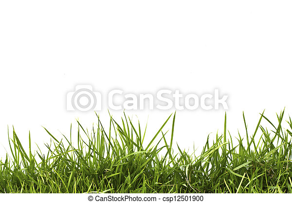 fresh spring green grass isolated on white background. - csp12501900
