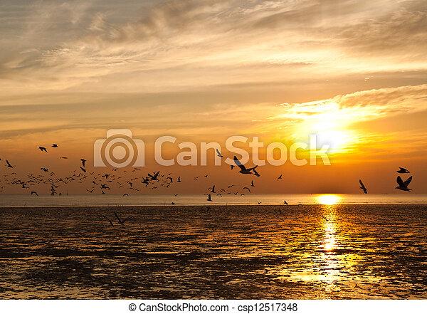 库存照片-海鸥, 日落, 背景