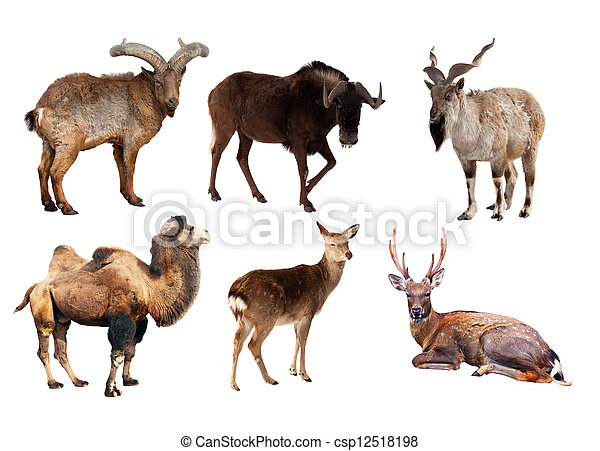 Set of Artiodactyla mammal animals  - csp12518198