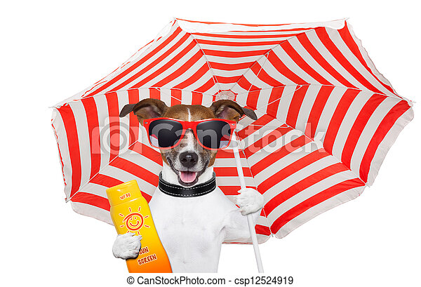 summer dog  - csp12524919