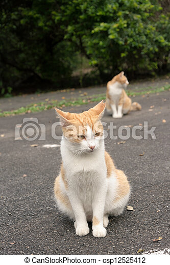 Undomesticated cat