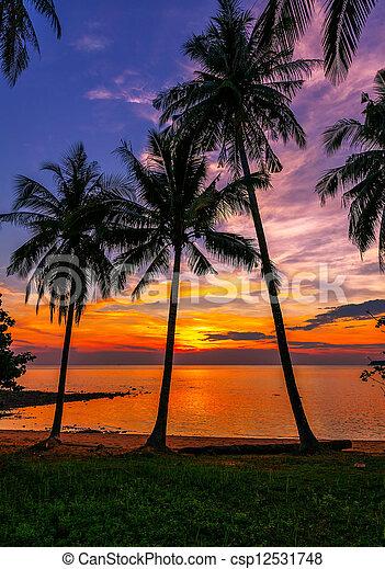 Tropical beach at sunset - csp12531748
