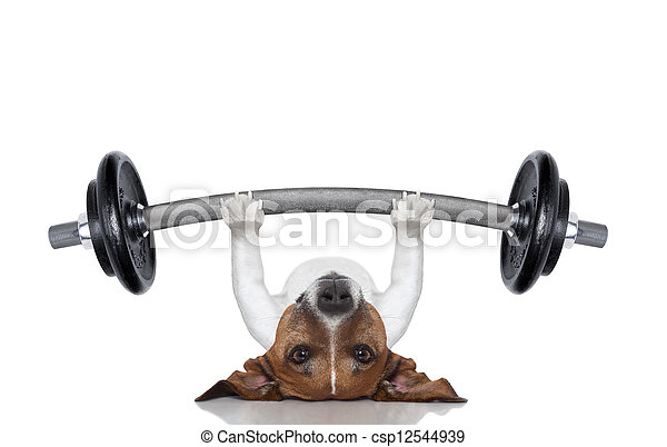 personal trainer dog - csp12544939