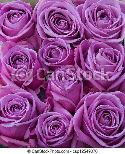 bilder von lila rosen b ndel von lila ros blume k pfe csp12549070 suchen sie stock. Black Bedroom Furniture Sets. Home Design Ideas