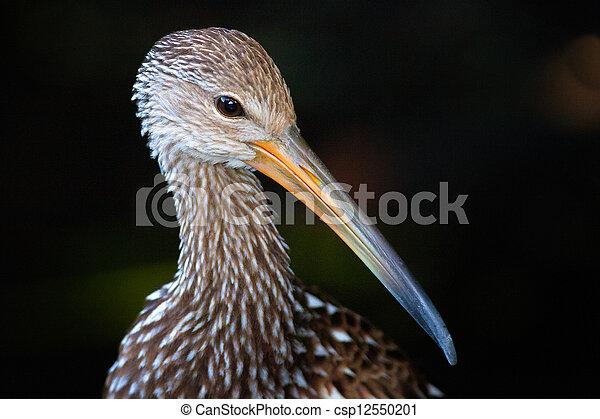 Photographies de ou note oiseau long bec portrait for Oiseau a long bec
