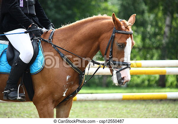 Palomino pony portrait during equestrian competition in summer