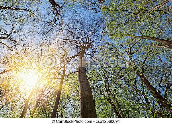 Banque de photographies de couronne arbres feuilles - Arbres a feuilles caduques ...