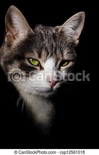 黑色kitty猫手机壁纸