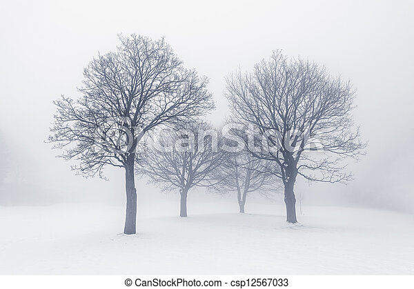 Winter trees in fog - csp12567033