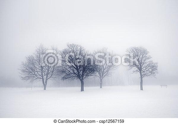 Winter trees in fog - csp12567159
