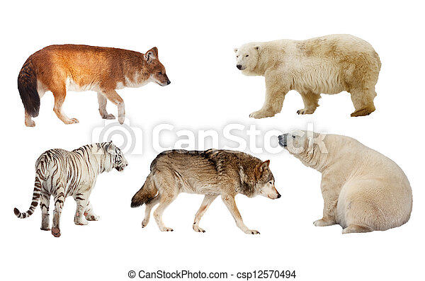 Carnivora mammal. Isolated over white  - csp12570494