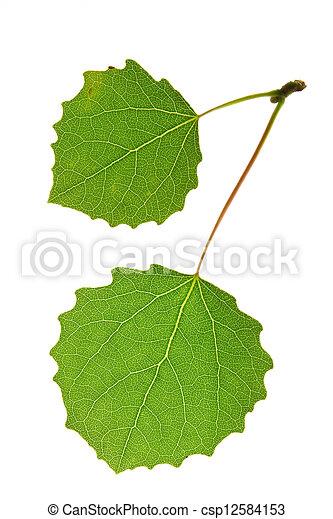 aspen leaf  - csp12584153