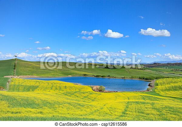 Tuscany, Crete Senesi landscape near Siena, Italy, europe. Small blue lake, green and yellow fields, blue sky with small clouds and a lonely pine tree on the left hill. - csp12615586