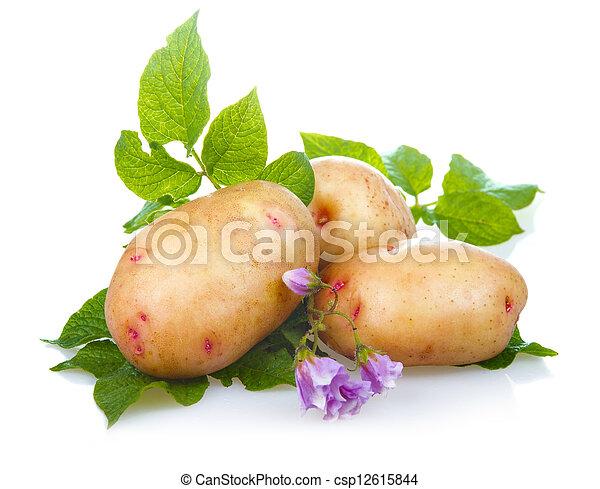 成熟, 土豆, 離開, 被隔离, 綠色, 堆, 蔬菜 - csp12615844