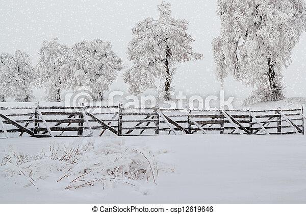snowy trees in winter landscape - csp12619646