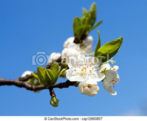 Beautiful spring flower - csp12660807