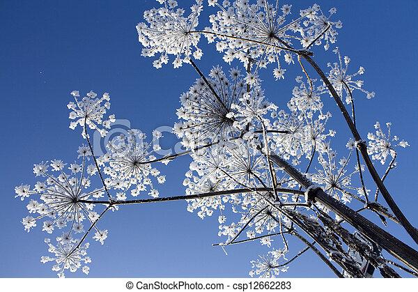images de givre, fleurs - plante, dans, givre, contre, les, ciel