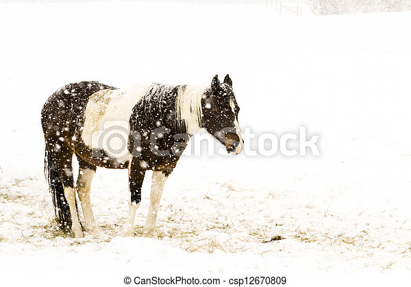 Horse - csp12670809