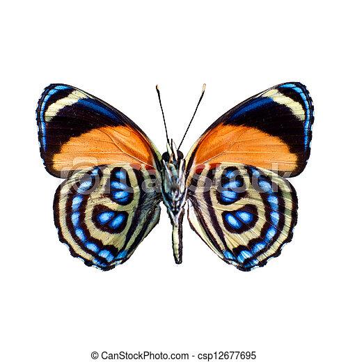蝶, 定義, 高く, 白い背景 - csp12677695