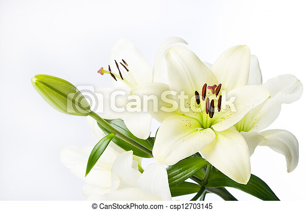 Full White Lily Stem and Flowers - csp12703145