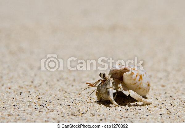 hermit crab running over - csp1270392