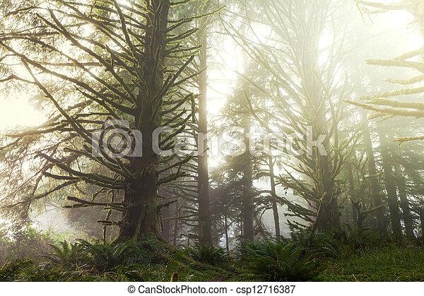 Rain forest - csp12716387