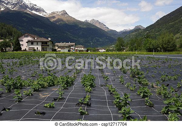 Agriculture in Switzerland. - csp12717704
