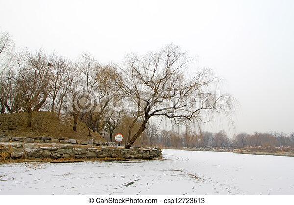 枯萎, 黄色, 树, 雪 - csp12723613