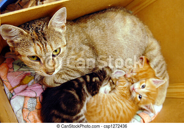 Cat with her kitties - csp1272436