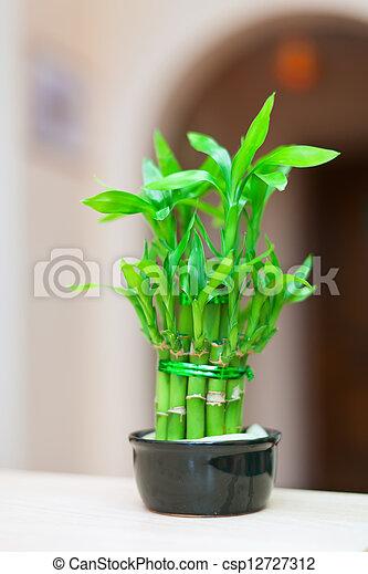 archivi fotografici di pianta bamb vaso fortunato