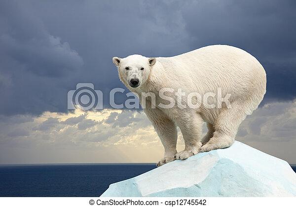 polar bear against sea landscape - csp12745542