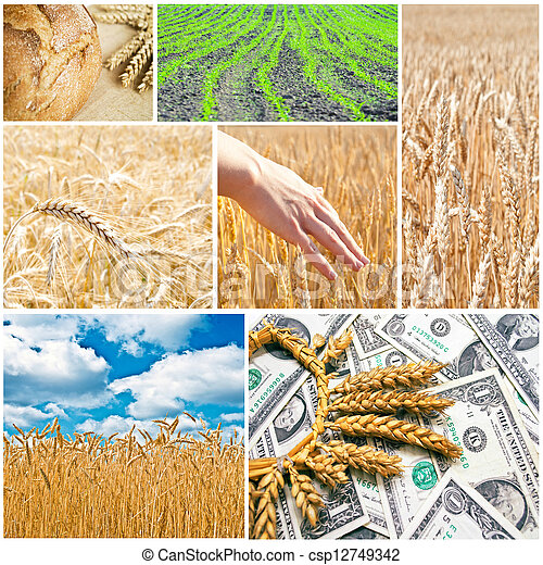 Agriculture collage - csp12749342