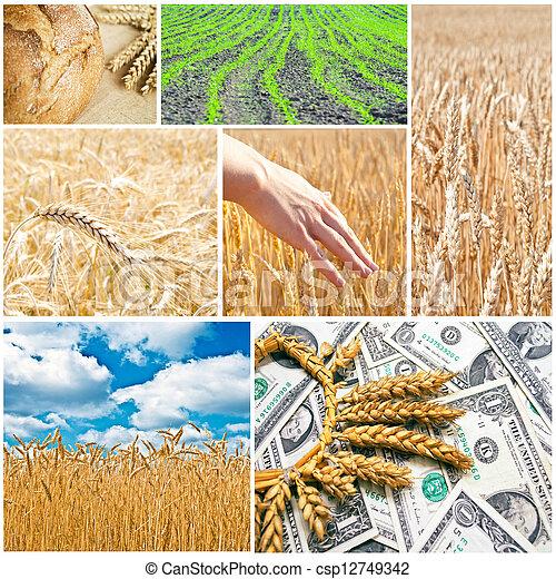 Agriculture collage - csp12749342