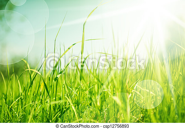 abstract nature background with grass - csp12756893