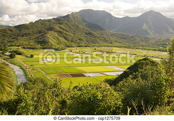 Hanalei Valley and Taro Fields - csp1275709