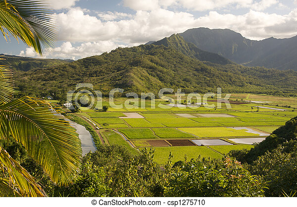Hanalei Valley and Taro Fields - csp1275710