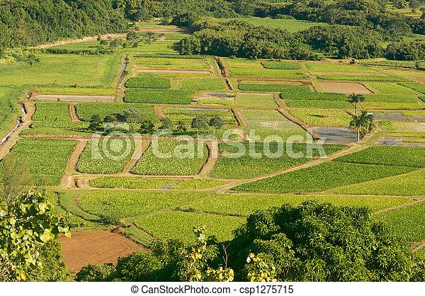 Hanalei Valley and Taro Fields - csp1275715