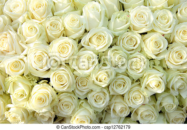 Group of white roses, wedding decorations - csp12762179