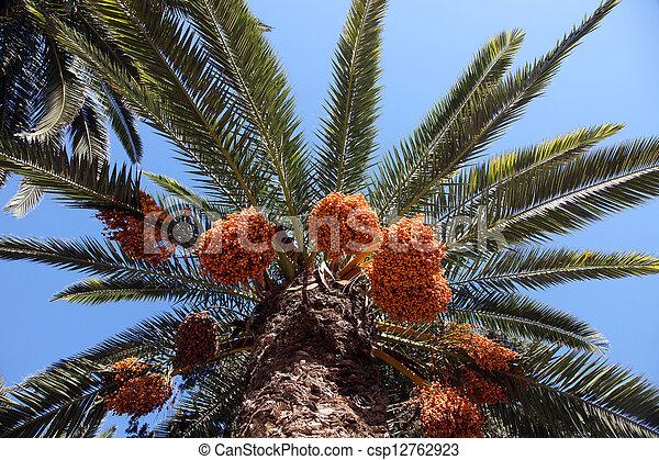 A close up of a phoenix dactylifera palm tree - csp12762923