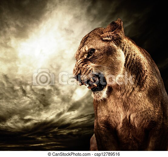 Roaring lioness against stormy sky - csp12789516