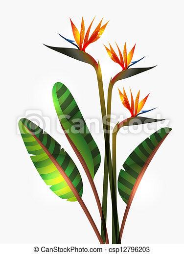 clipart vecteur de oiseau de paradis fleur et tige