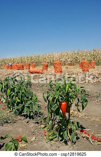 Agriculture - csp12819625