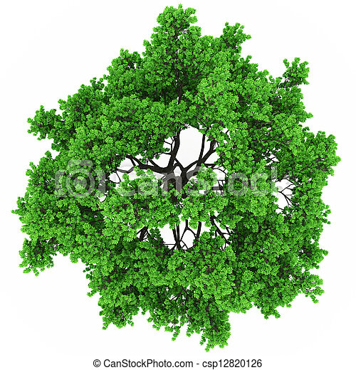 tree top view - csp12820126