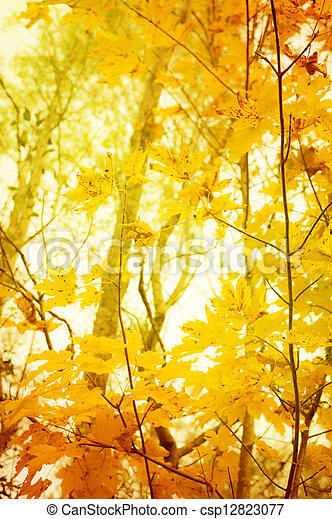 orange and yellow leafes of trees in fall for background - csp12823077